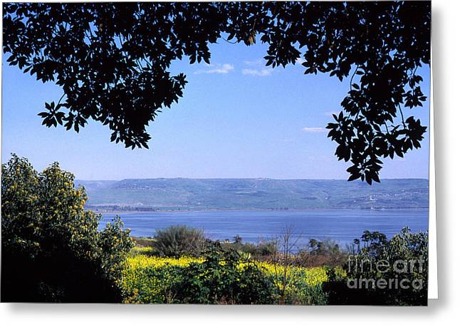 Sea Of Galilee From Mount Of The Beatitudes Greeting Card by Thomas R Fletcher