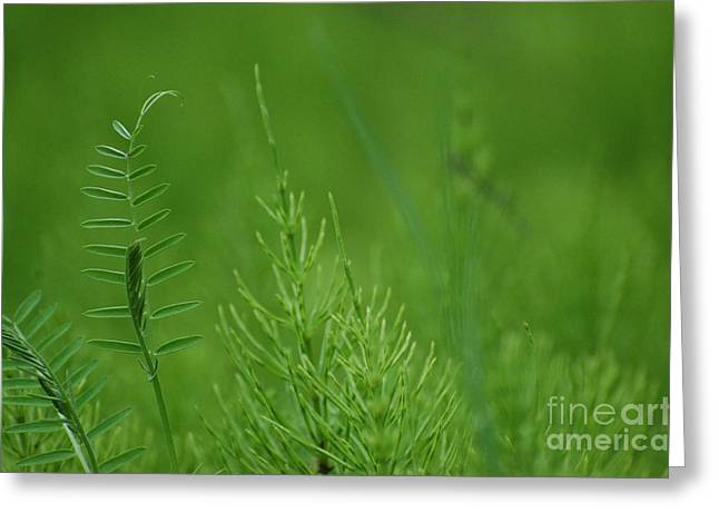 Greeting Card featuring the photograph Sea Of Green by Bianca Nadeau