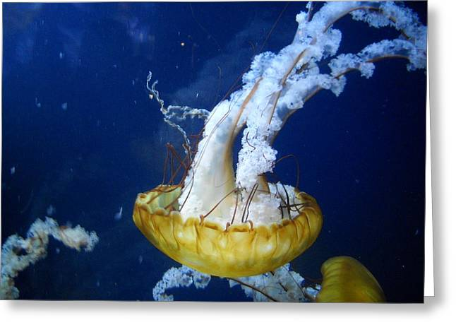 Sea Orchid Greeting Card