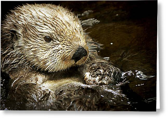 Sea Otter Greeting Card by Maria Angelica Maira
