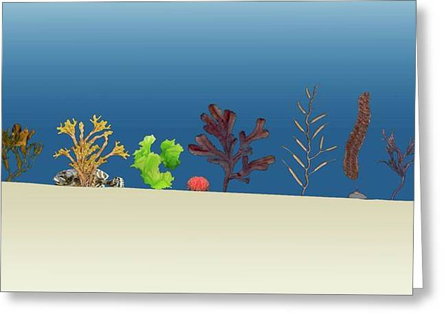 Sea Plants Greeting Card by Mikkel Juul Jensen