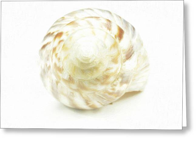 Sea Shell In Oil Paint  Greeting Card by Tommytechno Sweden