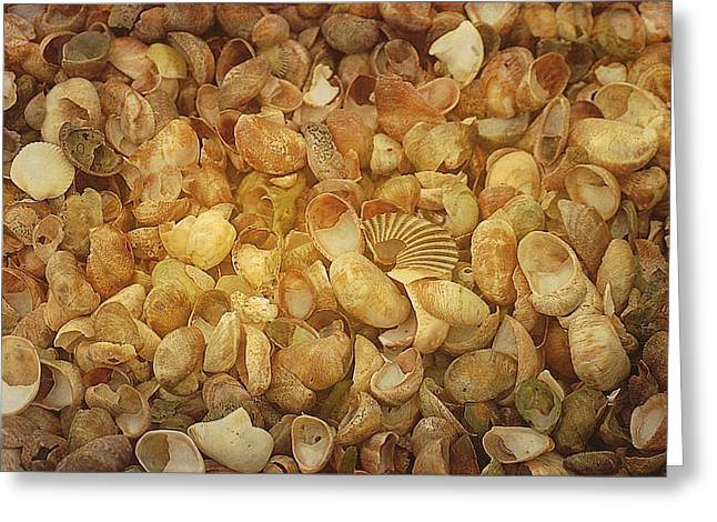 Seashells Red River Beach Harwich Cape Cod Ma Greeting Card by Suzanne Powers
