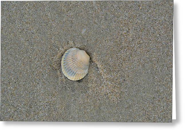 Sea Shell Sally Greeting Card by JAMART Photography