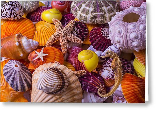 Sea Shell Treasures Greeting Card by Garry Gay