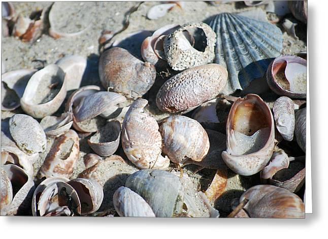 Sea Shells Greeting Card by Alan Holbrook