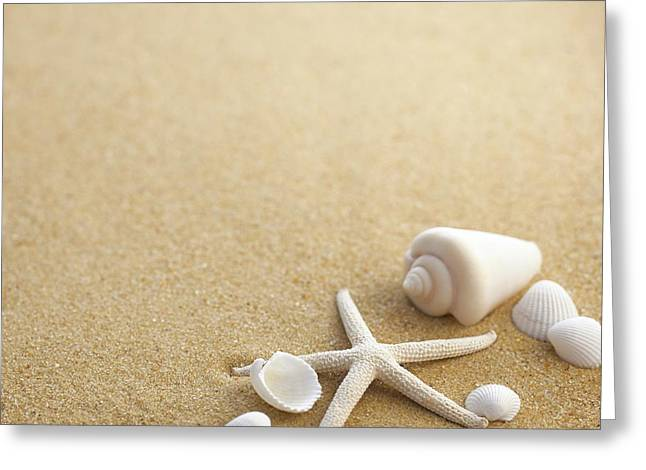 Sea Shells And Star Fish On Sand Greeting Card by Science Photo Library