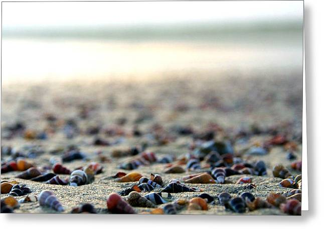 Sea Shells By The Sea Shore Greeting Card by Kaleidoscopik Photography