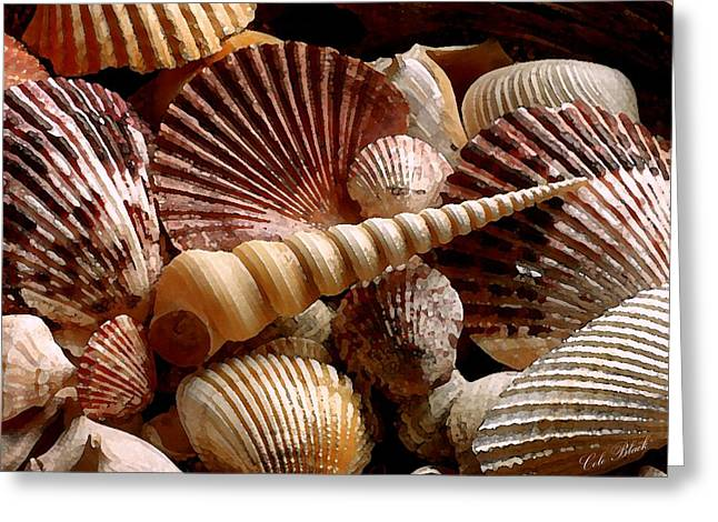 Sea Shells Greeting Card by Cole Black
