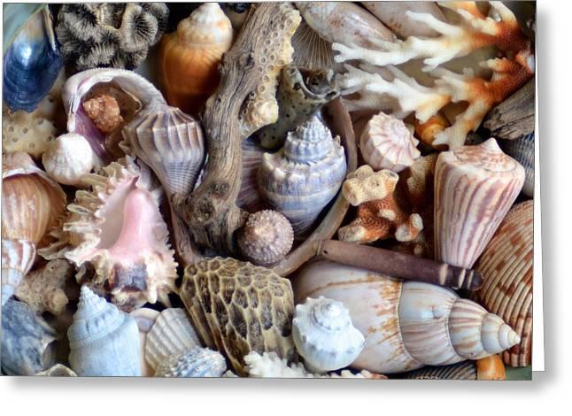 Sea Shells Greeting Card by Elizabeth Abbott