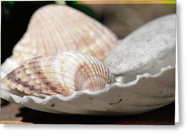 Sea Shells In A Shell Greeting Card by Tommytechno Sweden