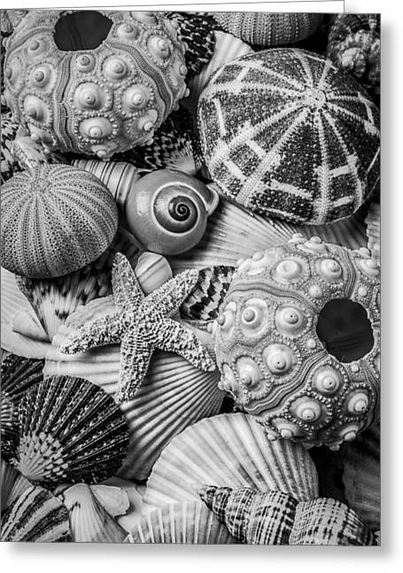 Sea Shells In Black And White Greeting Card by Garry Gay