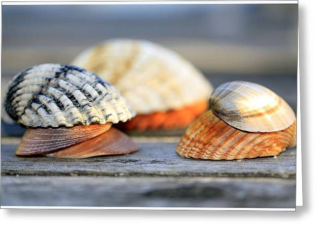 Sea Shells On Wood Structure Greeting Card by Tommytechno Sweden