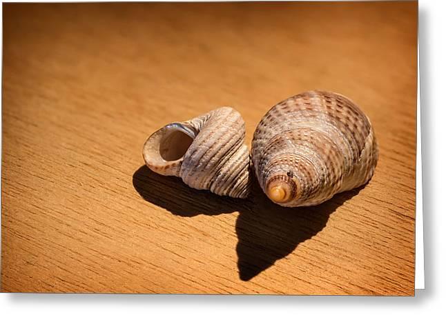 Sea Shells_3 Greeting Card by Joe Hudspeth