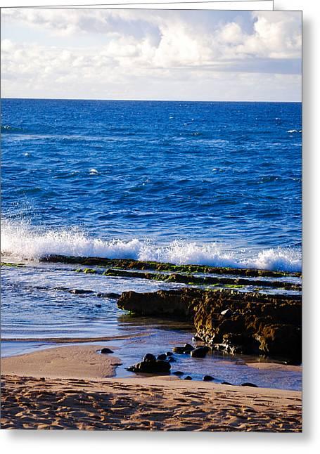Sea Shelves Greeting Card by Christi Kraft
