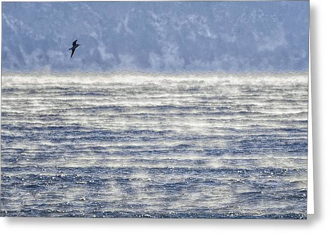 Sea Smoke And Gull Blues Greeting Card by Marty Saccone