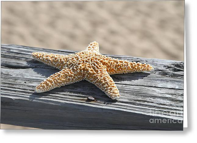 Sea Star On Railing Greeting Card by Cathy Lindsey
