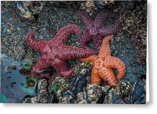 Sea Stars Greeting Card by Mike  Walker