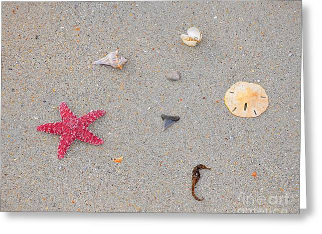 Sea Swag - Red Greeting Card by Al Powell Photography USA