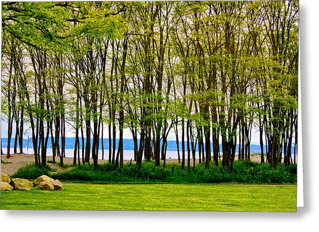 Sea Through The Trees Greeting Card