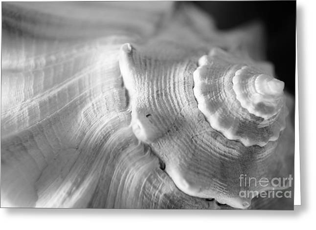 Sea Treasure Greeting Card by Kelly Nowak