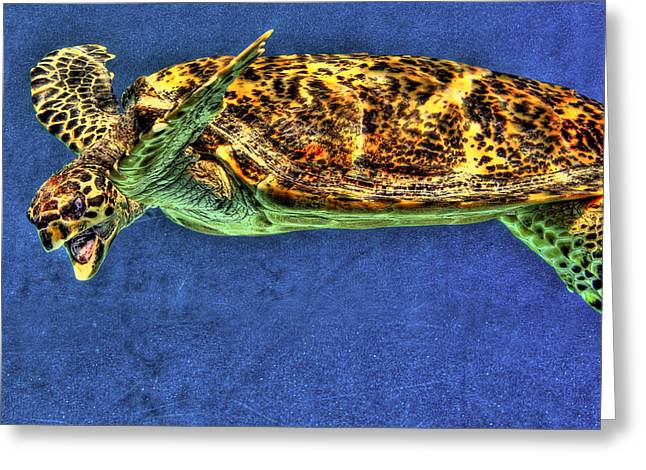 Sea Turtel Greeting Card by Karen Walzer