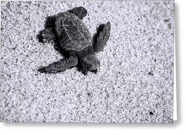 Sea Turtle In Black And White Greeting Card by Sebastian Musial