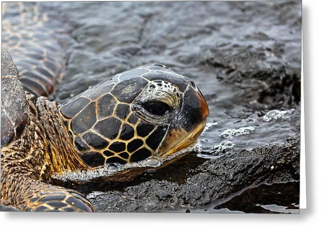 Sea Turtle Puako Tidepools Greeting Card by Rick Starbuck