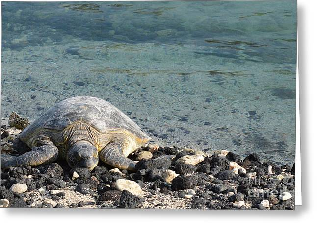 Sea Turtle Greeting Card by Renie Rutten