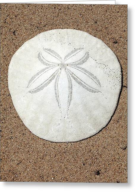 Sea Urchin Fossil Greeting Card