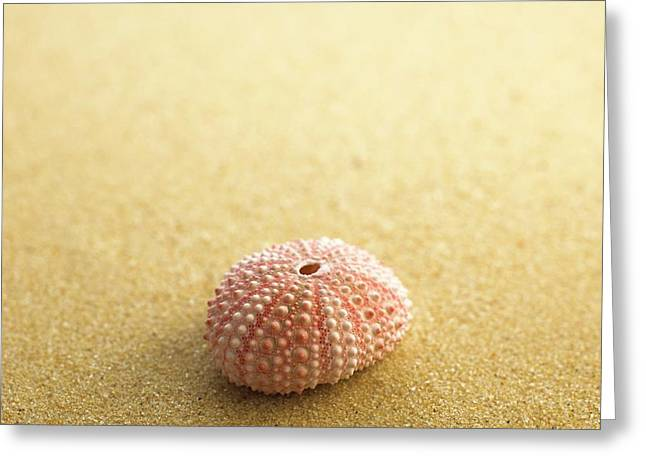 Sea Urchin Shell On Sand Greeting Card