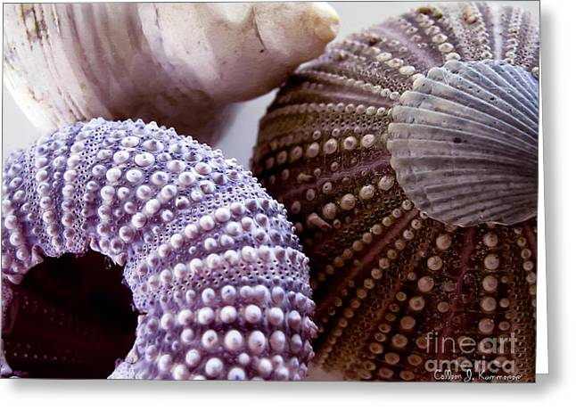 Sea Urchins  Greeting Card by Colleen Kammerer
