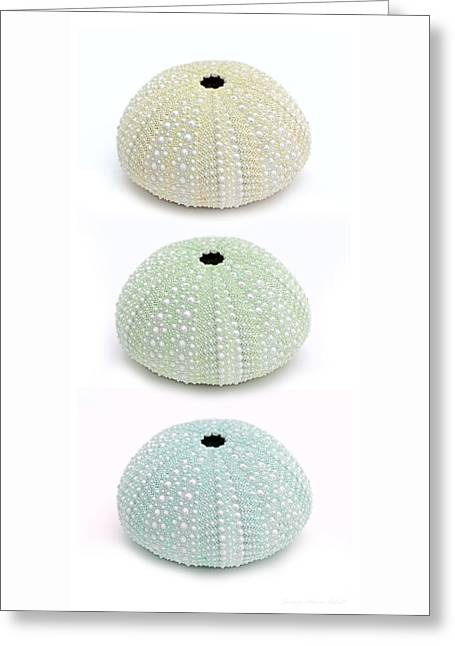 Sea Urchins Greens Three Vertical Greeting Card by Jennie Marie Schell