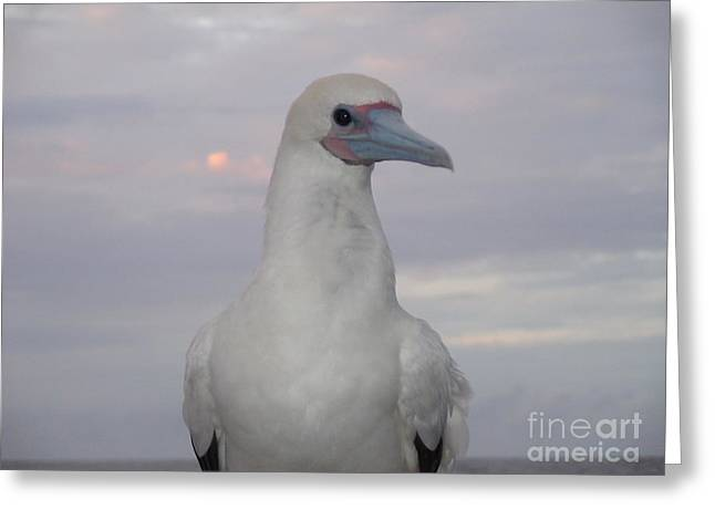 Seabird Greeting Card