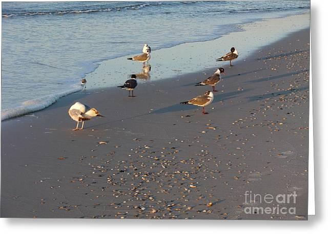 Seabirds Greeting Card by Deborah DeLaBarre
