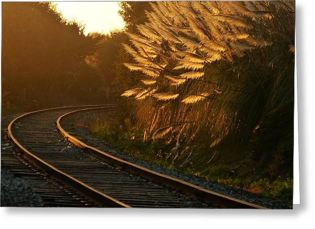 Seacliff Tracks At Sunset Greeting Card