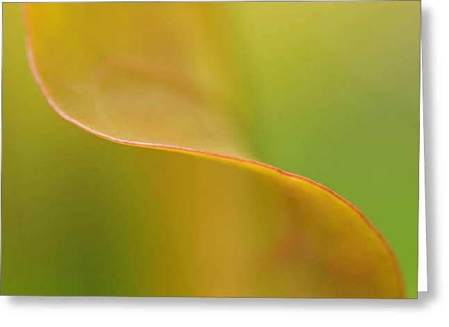 Seagrape Leaf II Greeting Card