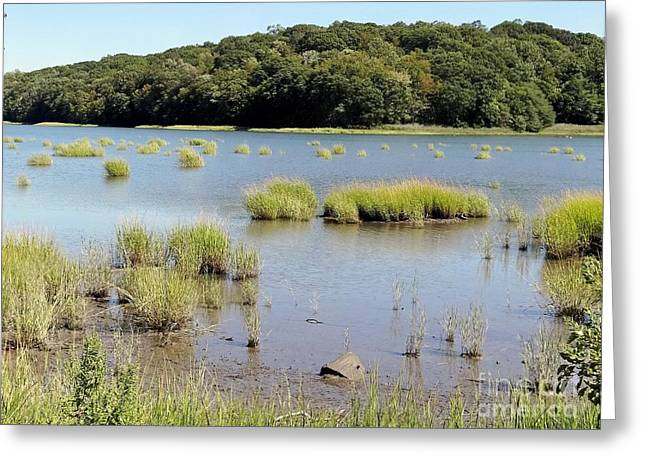 Greeting Card featuring the photograph Seagrass by Ed Weidman