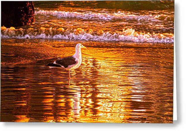 Seagul Reflects On A Golden Molten Shore Greeting Card