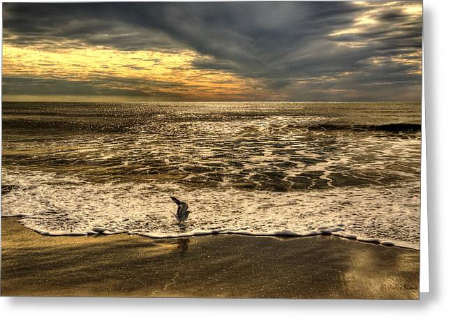 Greeting Card featuring the photograph Seagull Sunset Bath by Julis Simo