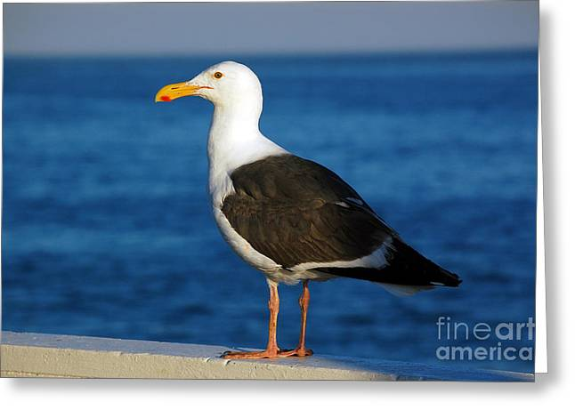 Seagull 1 Greeting Card by Debra Thompson