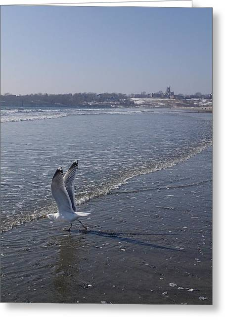Greeting Card featuring the photograph Seagull 1 by Robert Nickologianis