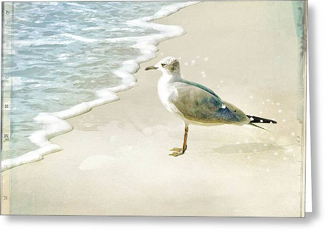 Seagull 2 Marco Island Greeting Card