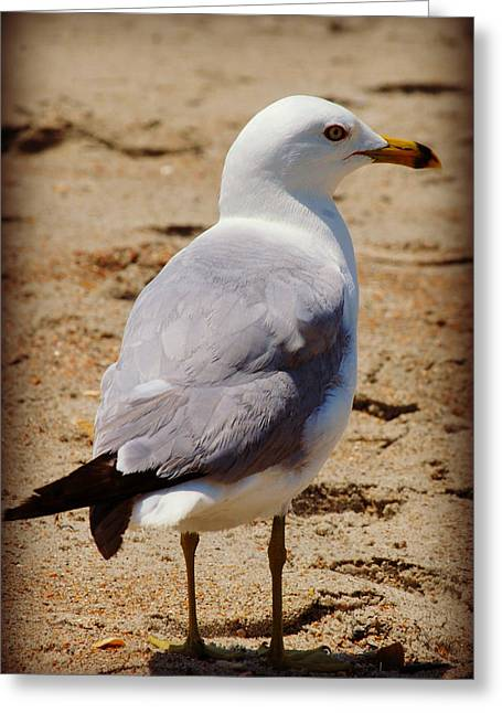 Seagull 3 Series 2 Greeting Card by Kelly Nowak