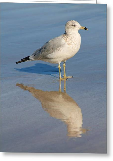 Seagull Greeting Card by Alicia Knust