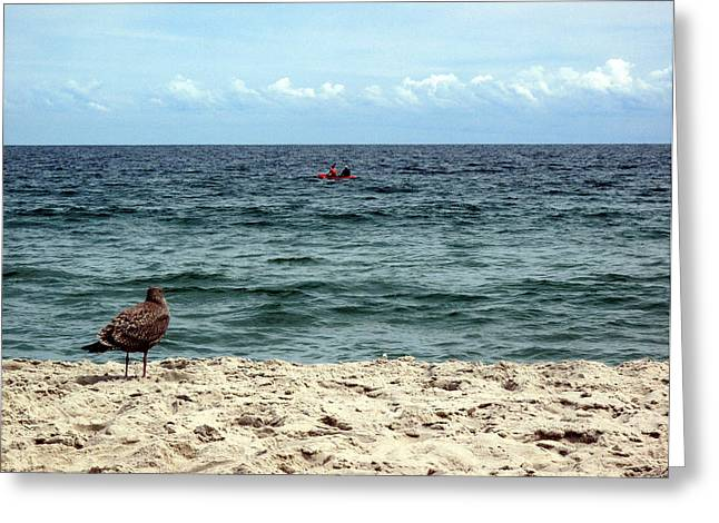 Seagull And Kayak Greeting Card by Dorin Adrian Berbier