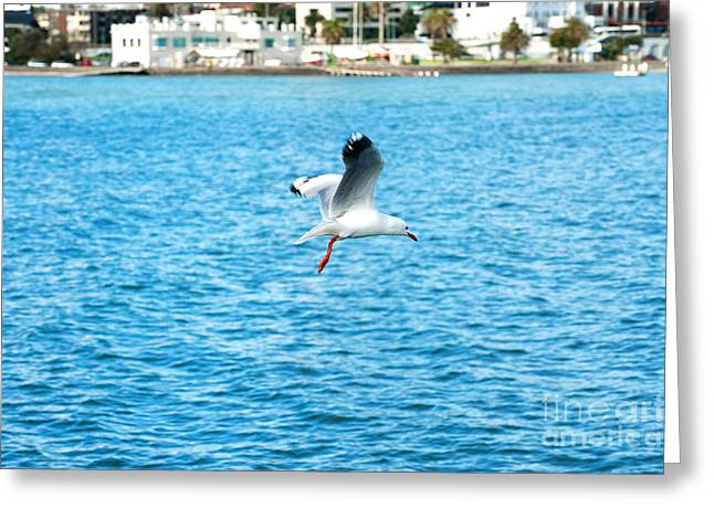 Greeting Card featuring the photograph Seagull At St Kilda by Yew Kwang