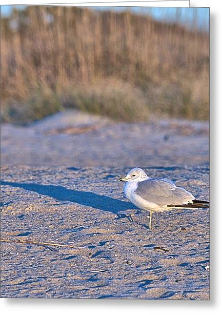 Seagull At Sunrise Greeting Card
