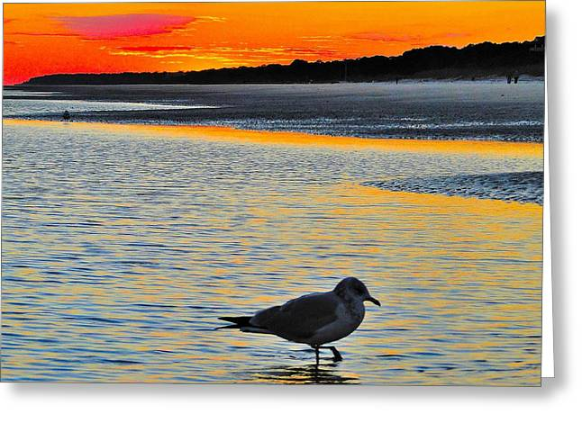 Seagull At Sunset Greeting Card by Cindy Croal