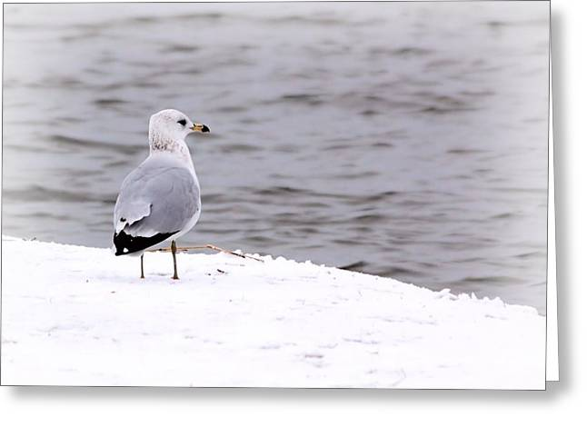 Seagull At The Lake In Winter Greeting Card by Elizabeth Budd
